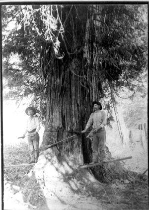 Barlow Kerola loggers