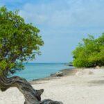 Aruba trees on the beach