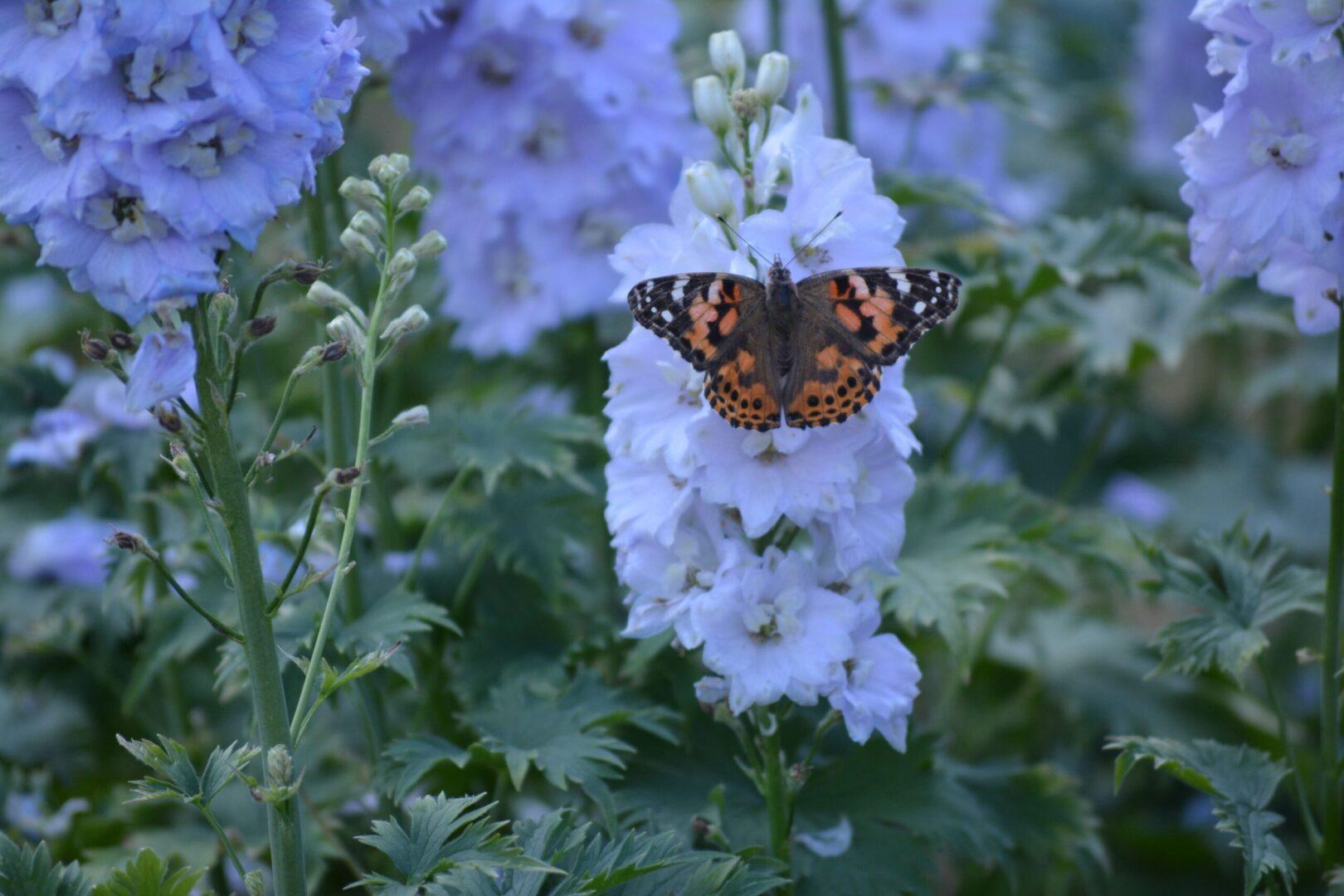 26 Butterfly