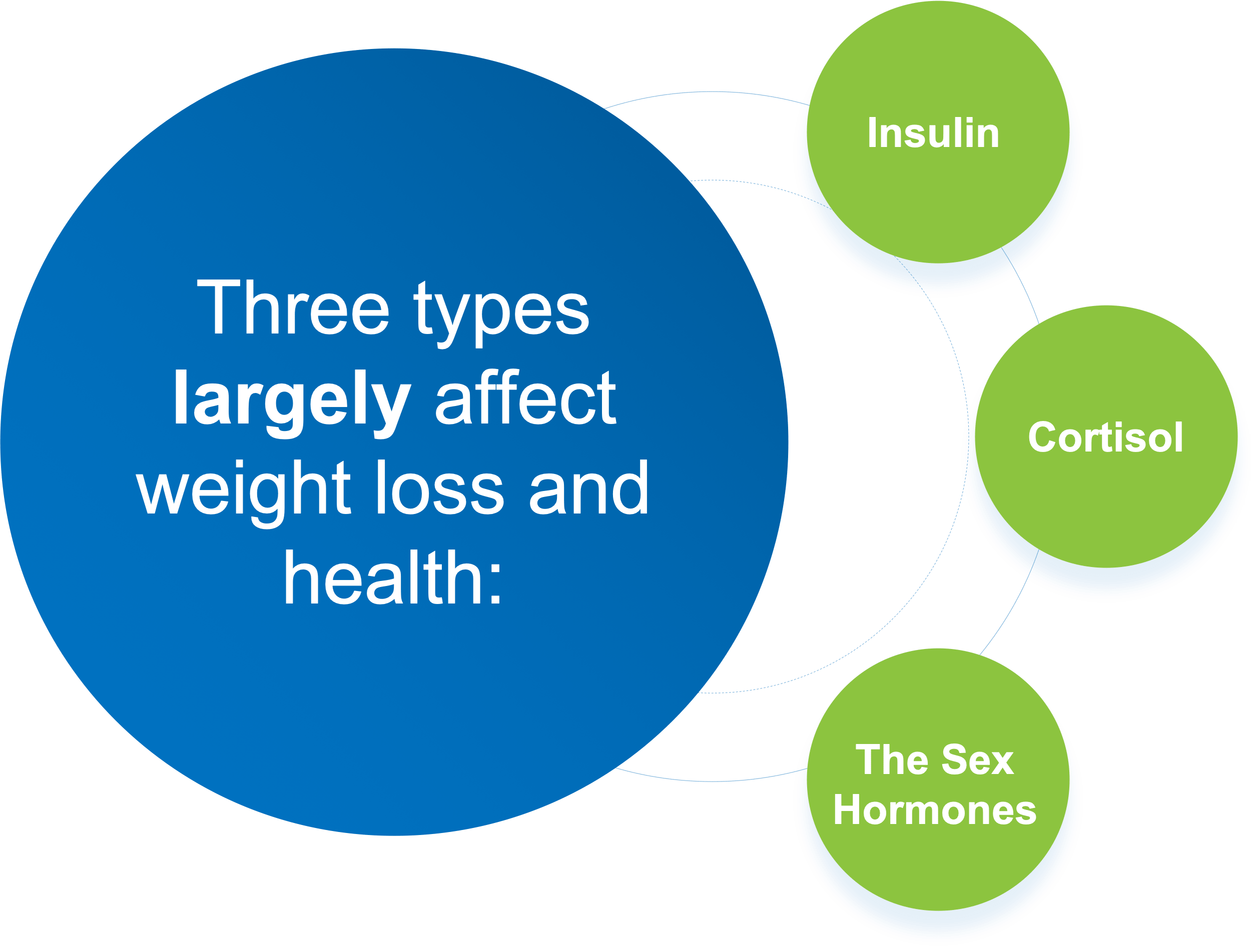 3 types of hormones that largely affect weight loss - illustration