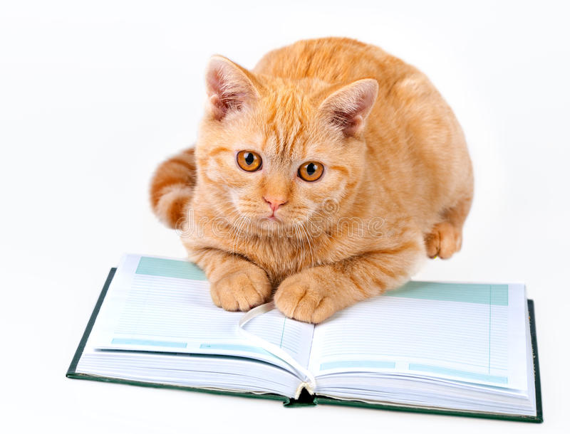 Cute Cat Isolated on White Background Reading
