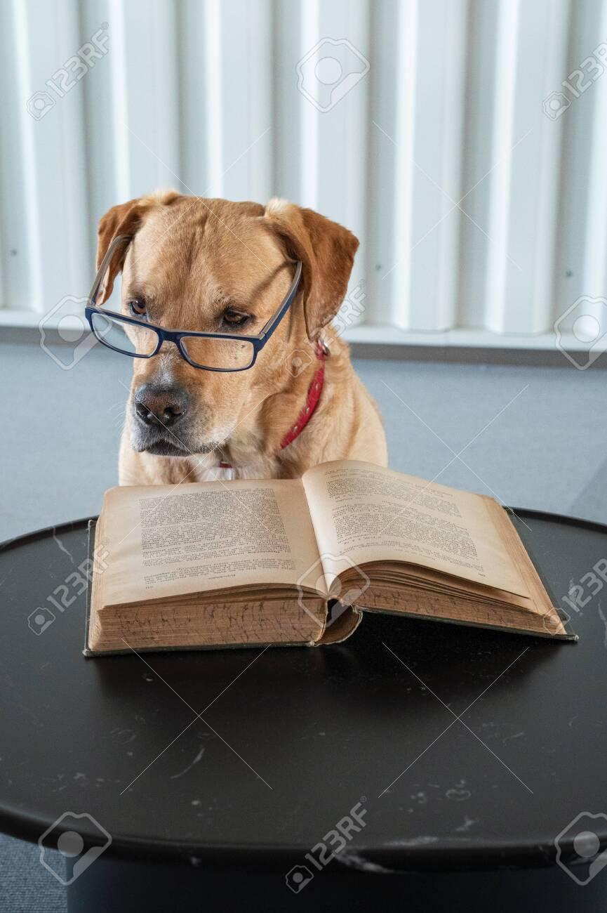 Dog Reading Book with Eyeglasses