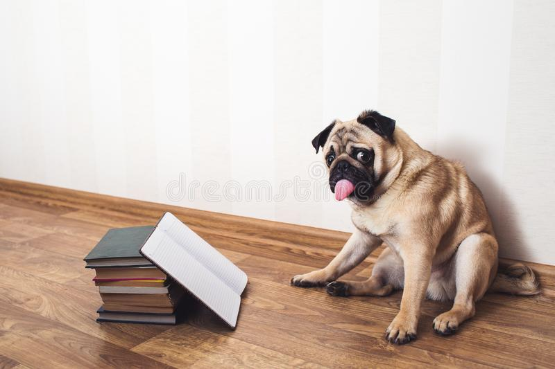Dog with Tongue Out Reading a Book