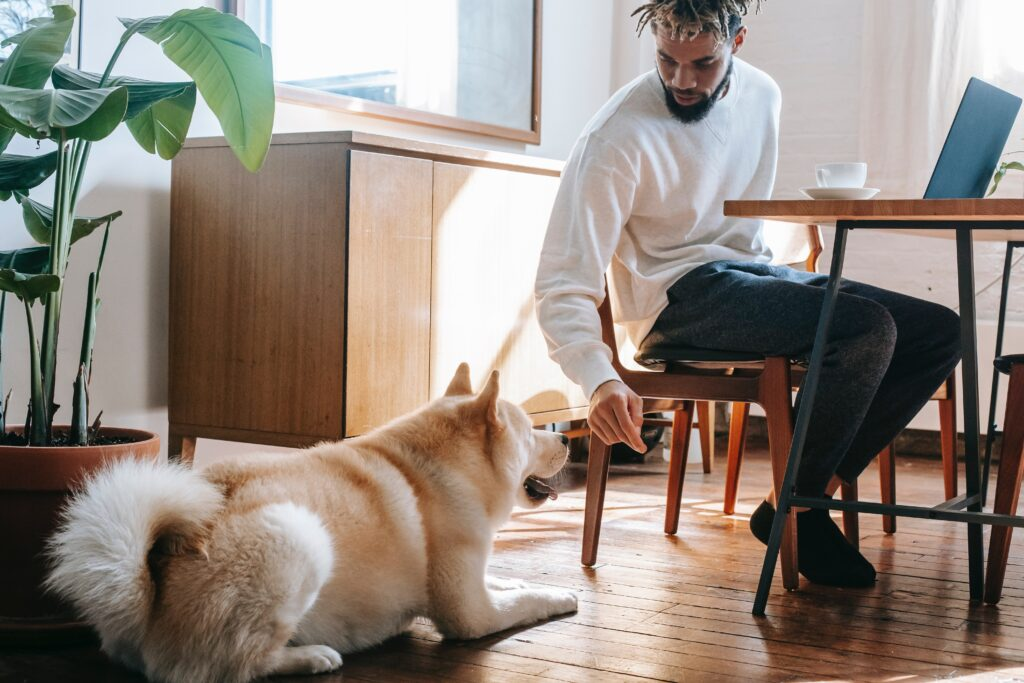 Helping Your Dog Adjust To Your New Home Working Schedule
