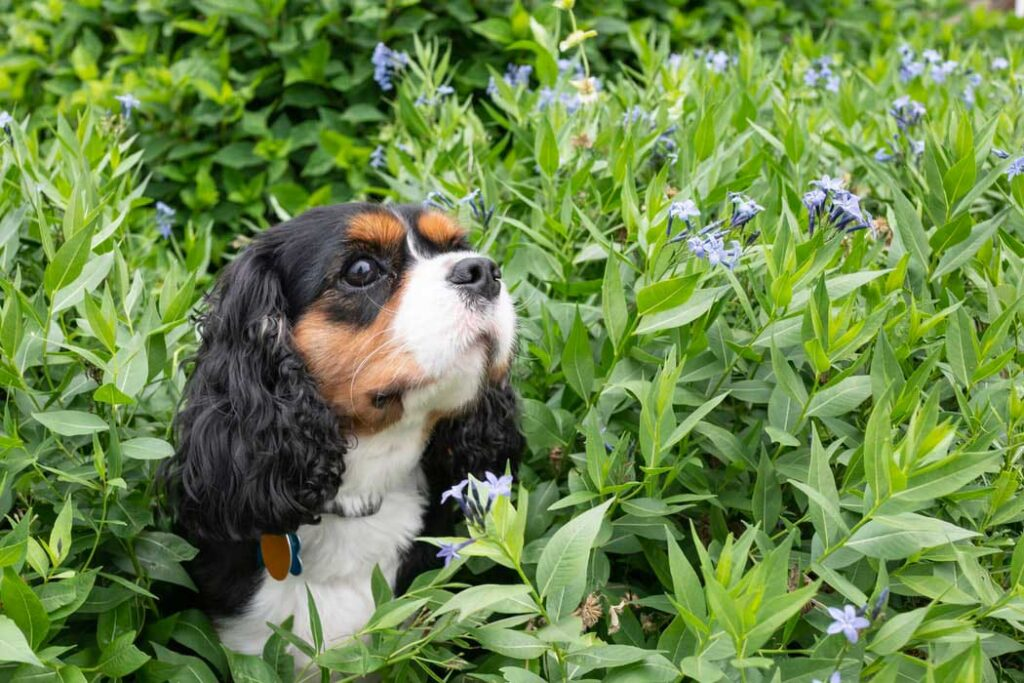 Common Insects To Keep Your Dog Away From This Spring