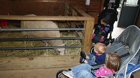 The Girls Visit the Farm