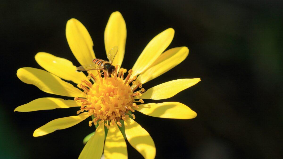 Мукода Кунико «Имя цветка»