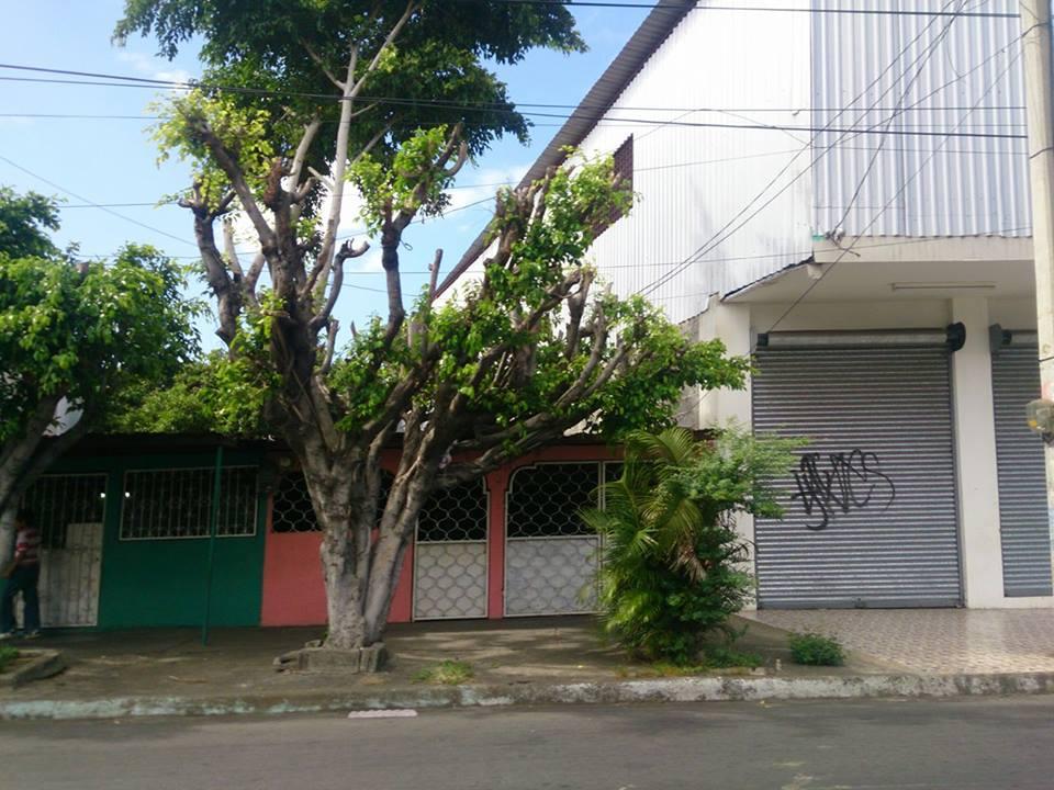 Requerimiento ambiental para cortar árboles en Managua