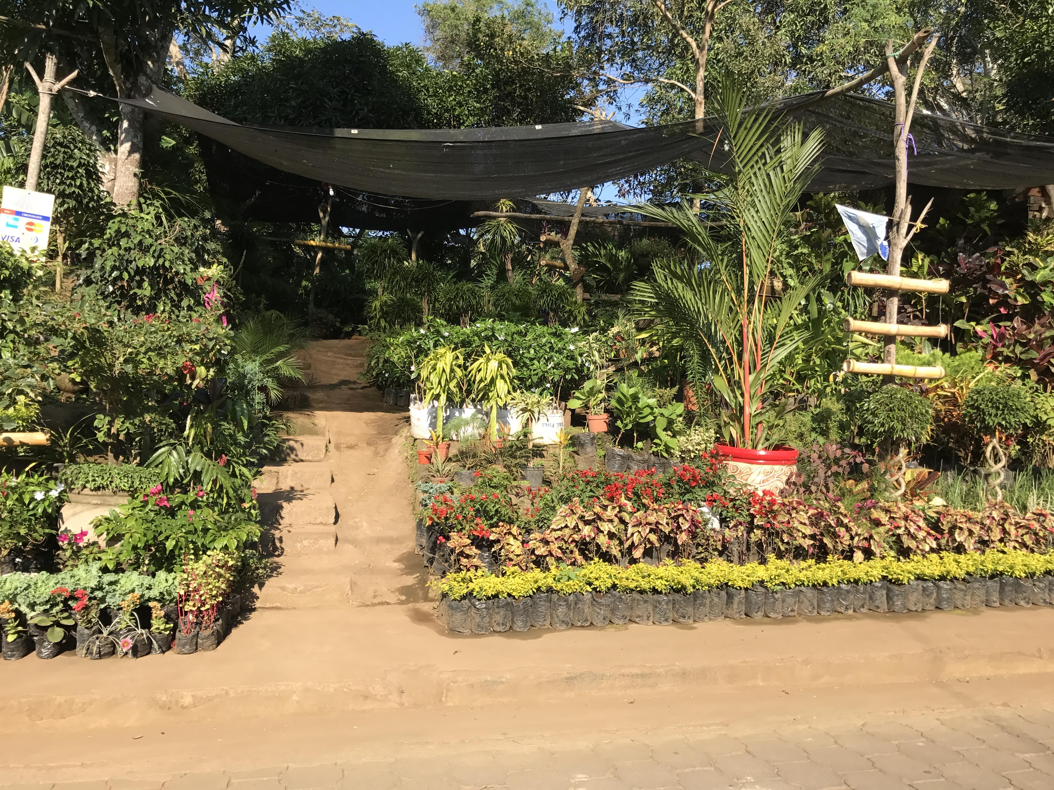 ¿Dónde encontrar viveros en Nicaragua?