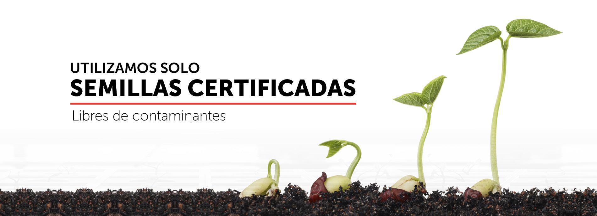 Utilizamos solo semillas certificadas libres de contaminantes