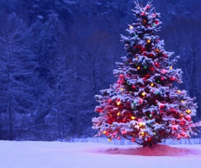 Christmas-Tree-in-Snow-1024x576