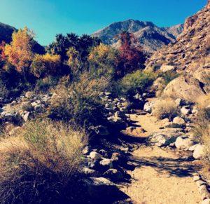 andreas canyon trail along creek