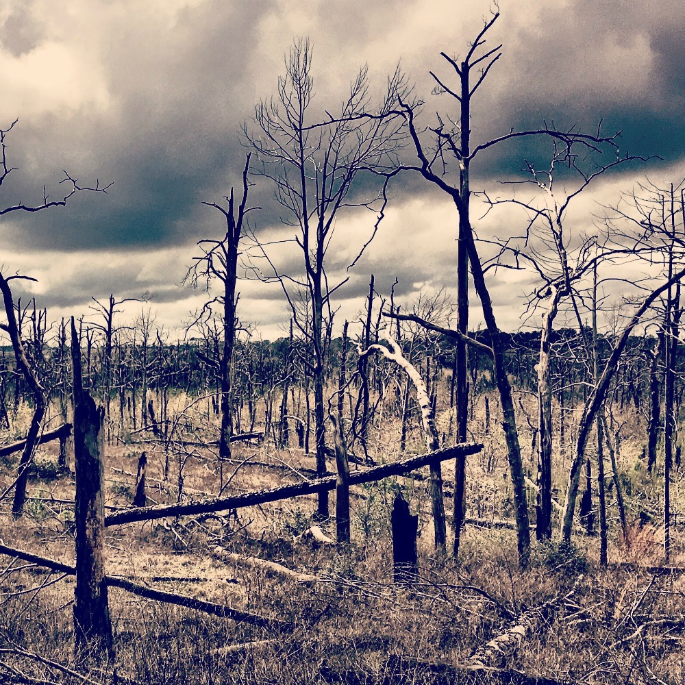bastrop state park, texas