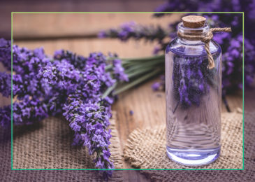 Lavender Essential Oil: The Good, the Bad and the Beautiful
