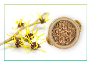 Witch Hazel: The Good, the Bad and the Beautiful