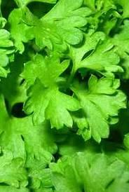 parsley-001