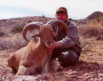 David Anaman MI Texas Barbary