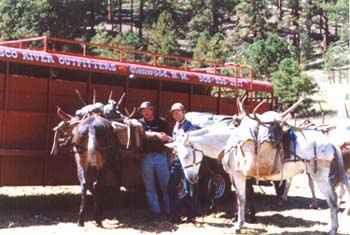 archery elk gila wilderness 334 & 305 Bulls