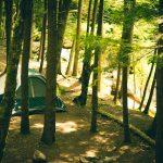 light-forest-trees-morning