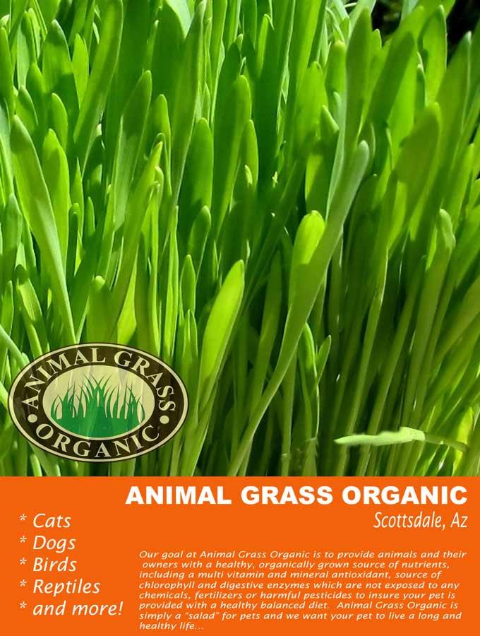 Where to Buy Animal Grass Organic