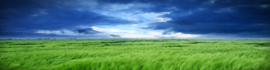 cropped-clouds-and-grass-header1.jpg