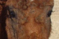 beldon face closeup 12-1-13