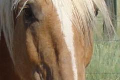 bj face closeup 6-28-13