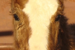 baby face closeup 1-29-11 (2)