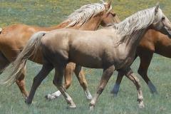 butch rt trotting 5-2012