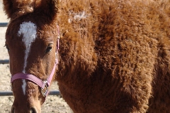 cepehus head and neck left in halter 3-4-12