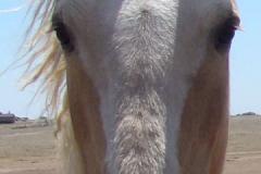 daisy face closeup 5-26-12