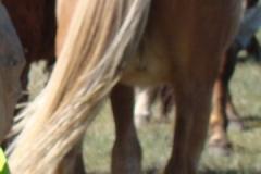 didley rear 5-16-15