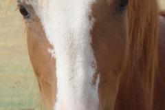 flash face closeup 7-14-13
