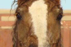 grits face closeup 1-29-11