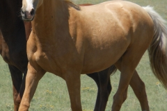 bop left trotting 5-2012