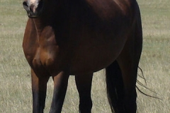 ruby front leftish trotting in 5-16-15