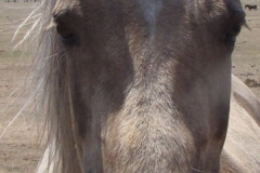 lark face closeup 5-26-12