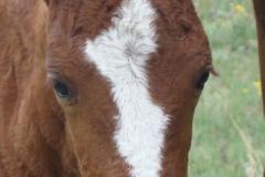 sangria face closeup 7-21-12