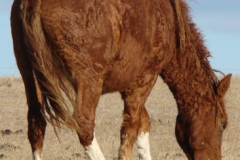 sangria rear rtish eating 12-1-13