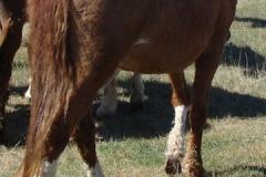 sangria rear rtish walking 5-16-15