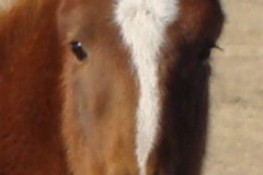 sophie face closeup 12-1-13 (2)