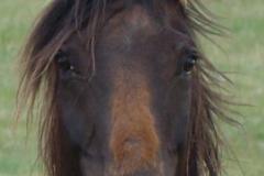 tern face closeup 5-28-11