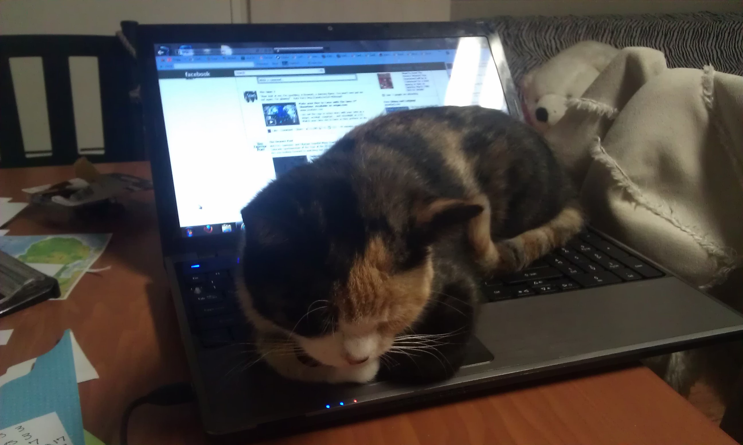 lela snoozing on lap top