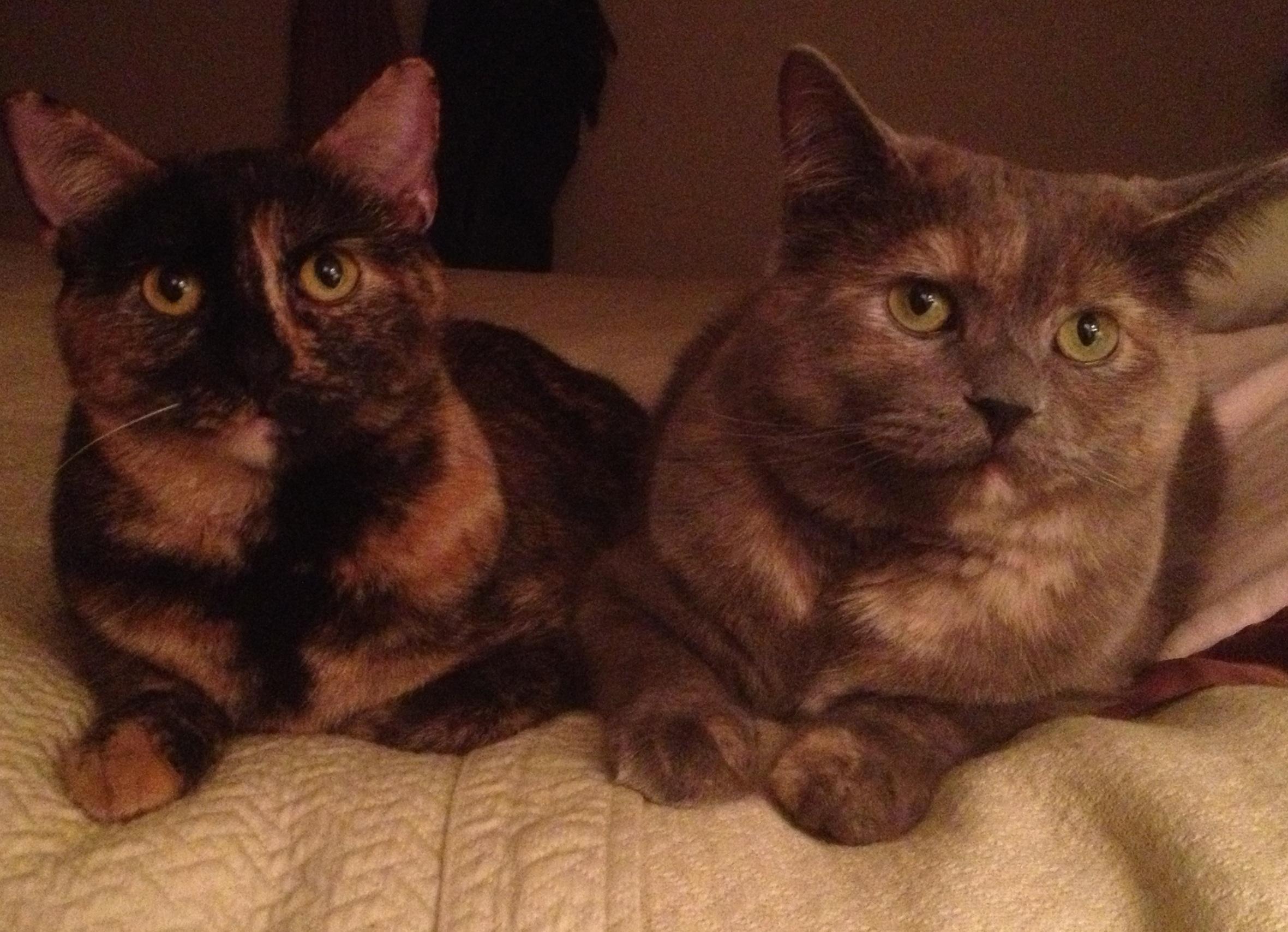 rachel and Rosie