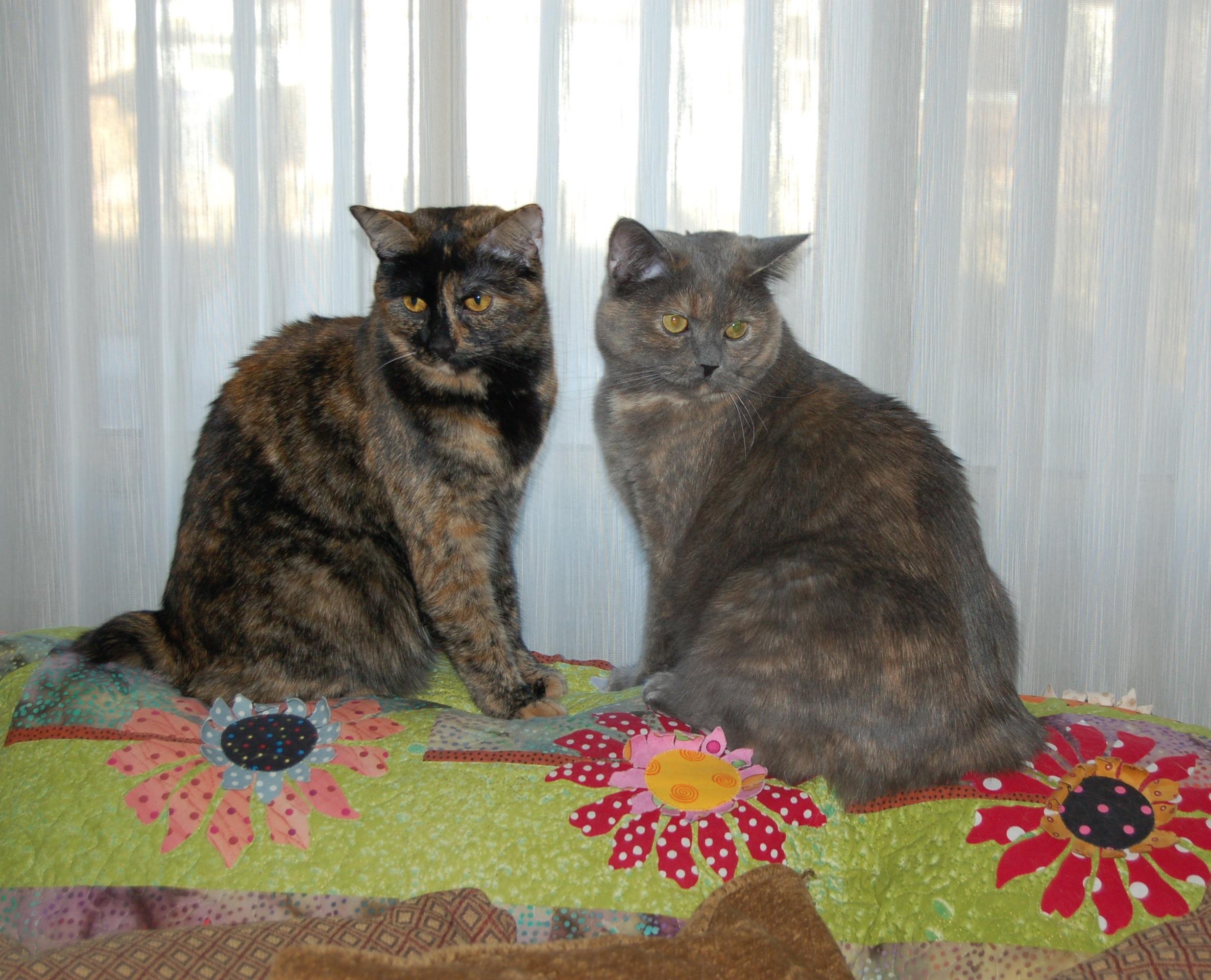 rosie and rachel 1-20-13