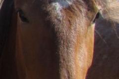 sarg face closeup 6-28-13