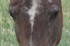 trixie face closeup 7-21-12