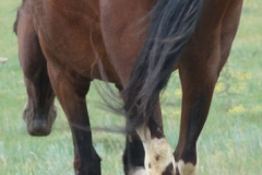trixie rear leftish 7-21-12