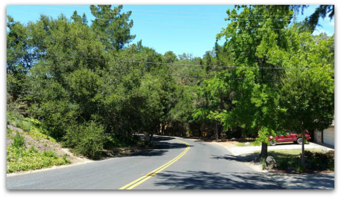 A photo of Old Adobe Road in West Los Gatos , a tree lined street