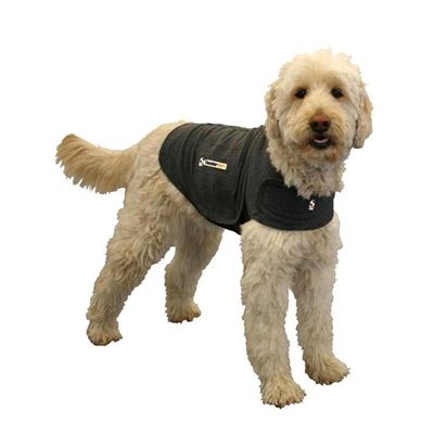 dog with vest